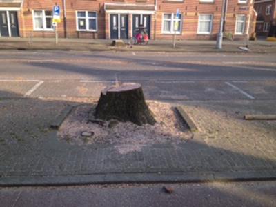 Na kap bomen werkzaamheden van start
