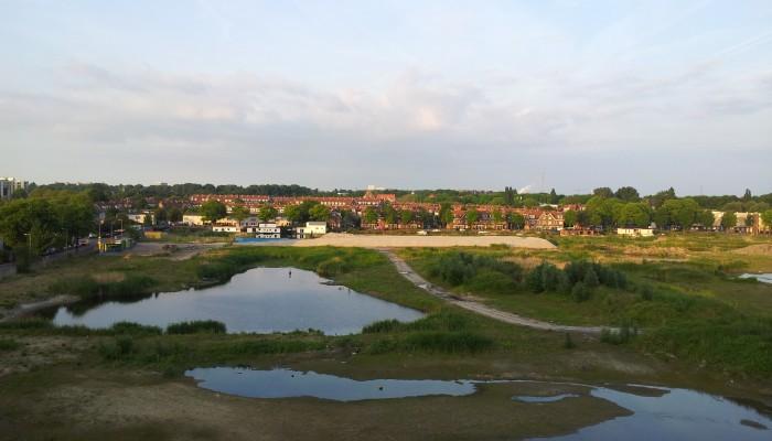 Dodaars verstoren bouwweg aanleg Overhoekseplassen